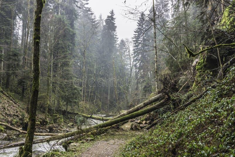 Árboles caidos sobre un rastro en el bosque foto de archivo