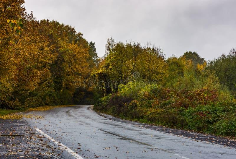 Árboles cerca del camino en montañas fotos de archivo libres de regalías