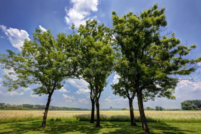 Árboles cerca del monumento de Jasenovac WWII imagenes de archivo