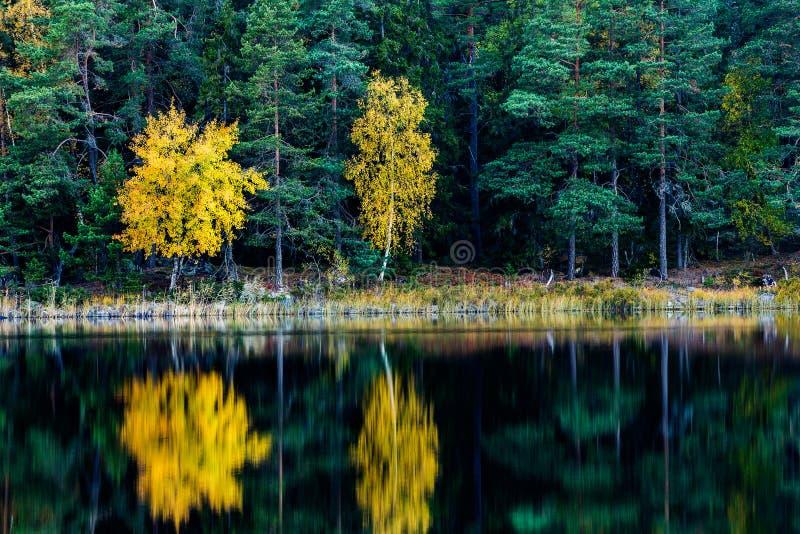 Árboles coloreados caída fotos de archivo libres de regalías