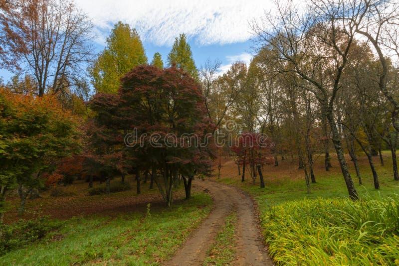 Árboles coloreados rojos del otoño imagen de archivo libre de regalías