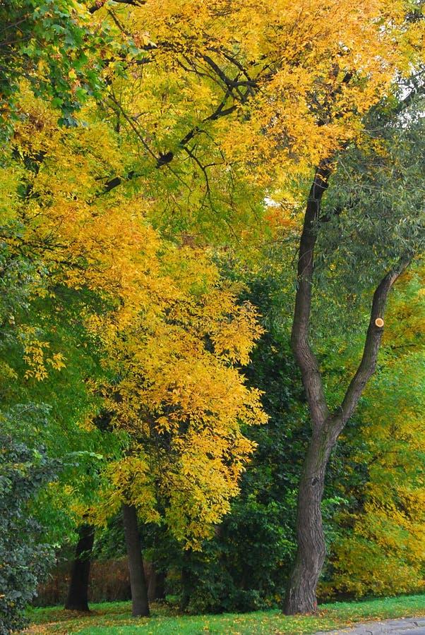 Árboles coloridos fotos de archivo
