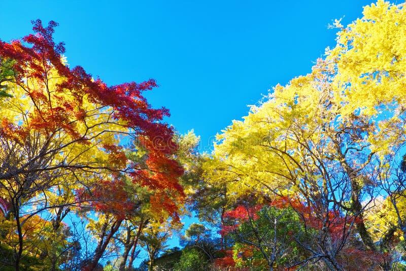 Árboles coloridos del otoño contra el cielo azul fotografía de archivo libre de regalías