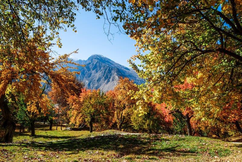 Árboles coloridos en otoño, jardín real de Altit, Gilgit-Baltistan, foto de archivo