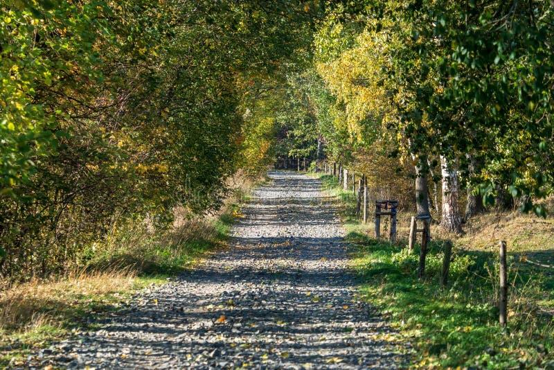 Árboles coloridos y camino rural en bosque del otoño fotografía de archivo libre de regalías