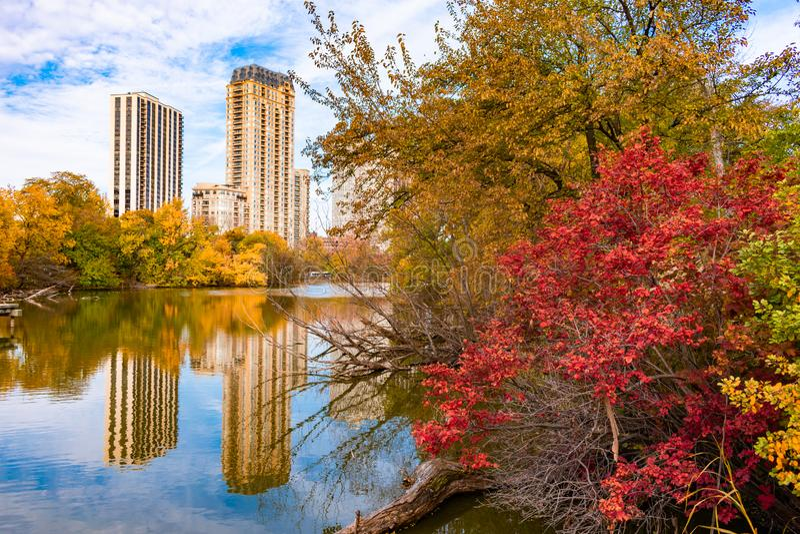 Árboles coloridos y charca del norte circundante de las plantas en Lincoln Park Chicago durante otoño imagenes de archivo