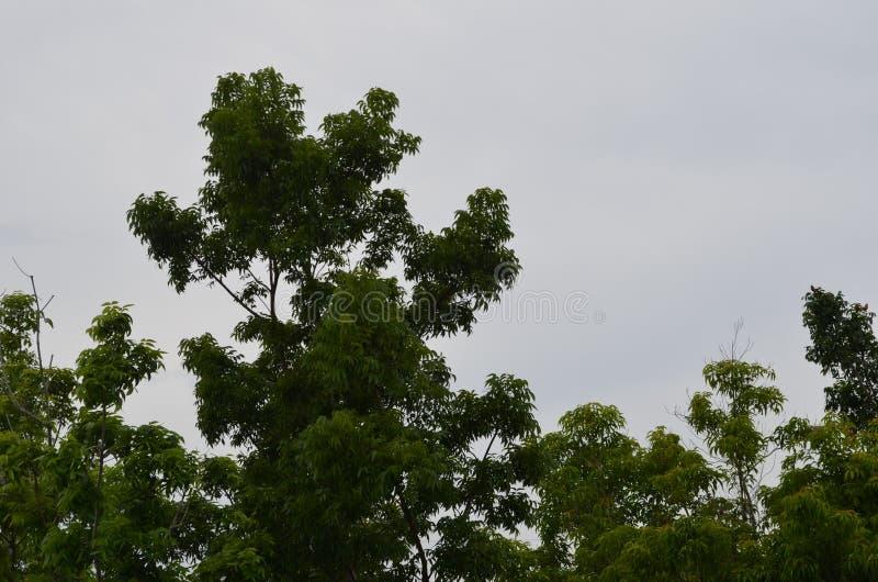 Árboles como viene la lluvia sobre imágenes de archivo libres de regalías