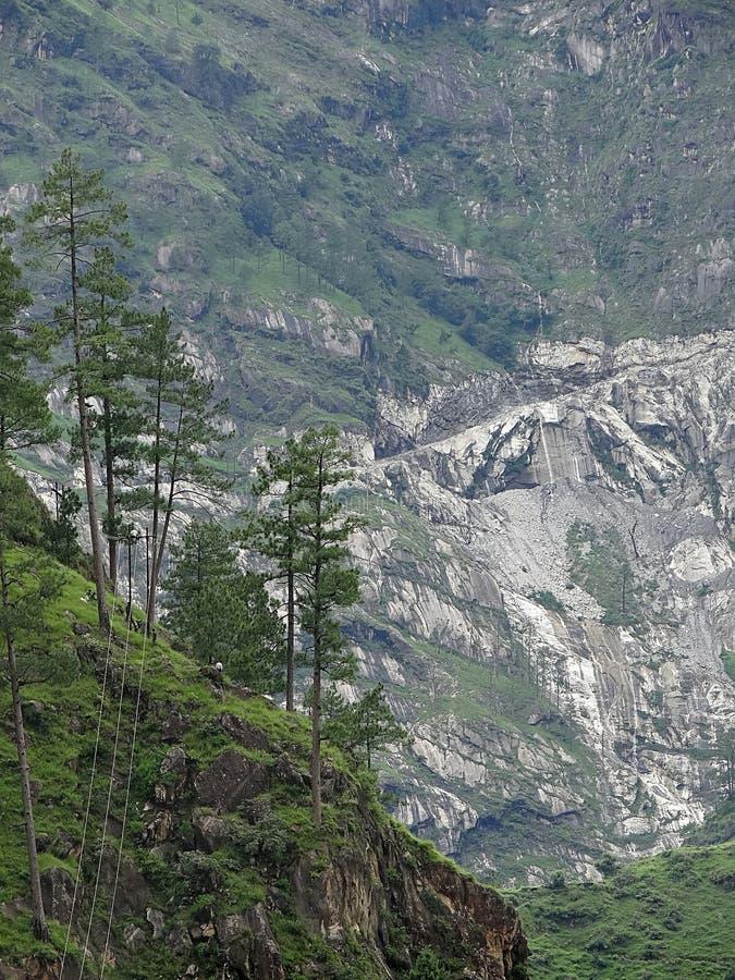 Árboles coníferos en un fondo verde rocoso de cuesta de montaña imagenes de archivo