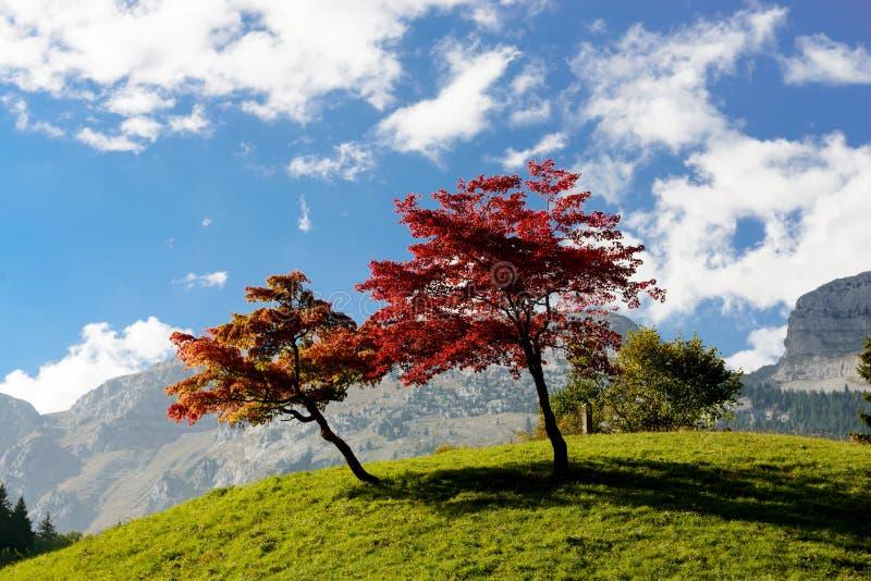 árboles con colores hermosos de la caída fotos de archivo libres de regalías