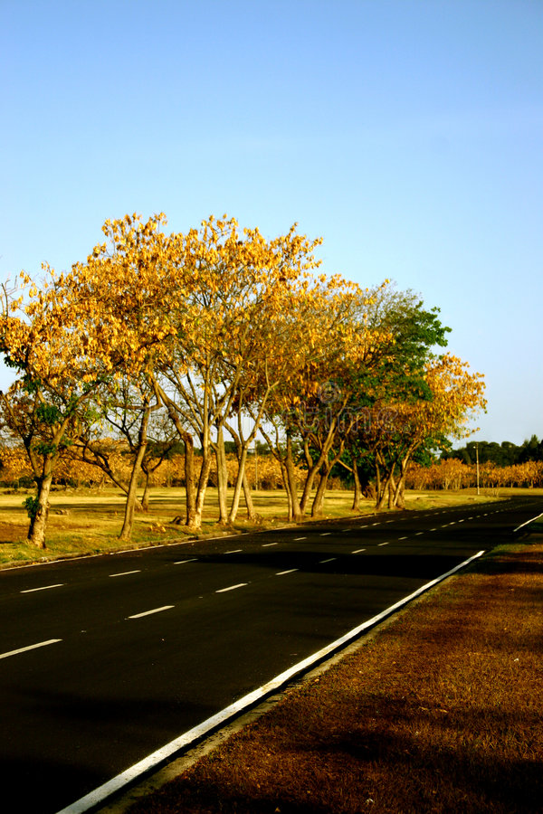 Árboles con el camino foto de archivo libre de regalías