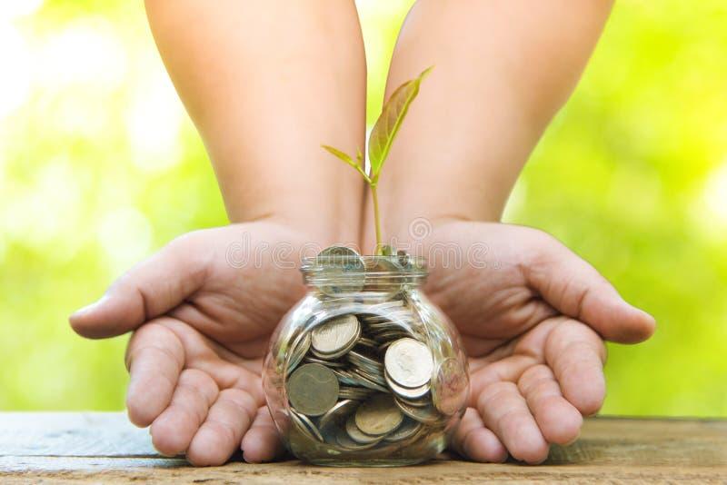 Árboles con el dinero, el dinero de ahorro y las manos cada vez mayor Crecimiento cada vez mayor del negocio y cultivo financiero fotografía de archivo libre de regalías