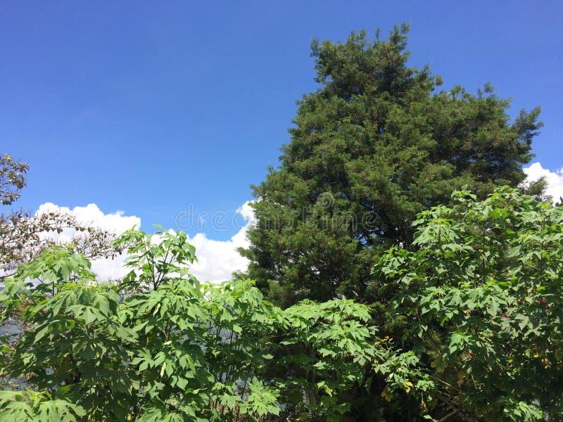 Árboles con el fondo del cielo y de las nubes, día soleado fotos de archivo libres de regalías
