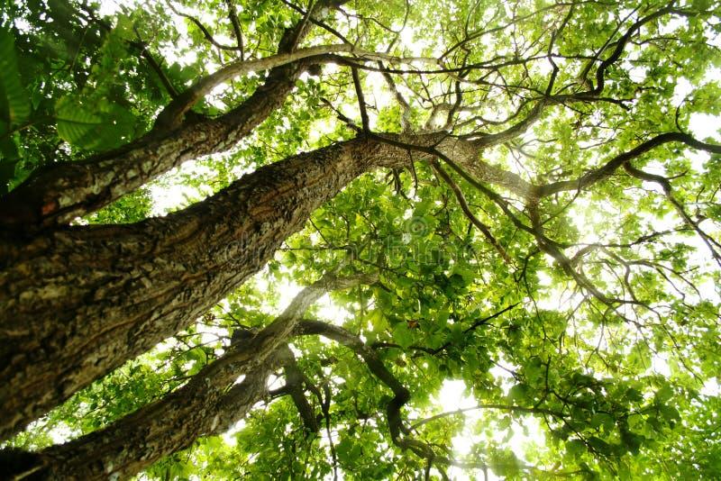 Árboles con las hojas verdes imagen de archivo libre de regalías