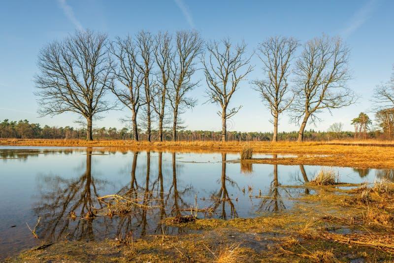 Árboles con las ramas desnudas reflejadas en el agua lisa del espejo de un simple en invierno fotos de archivo libres de regalías