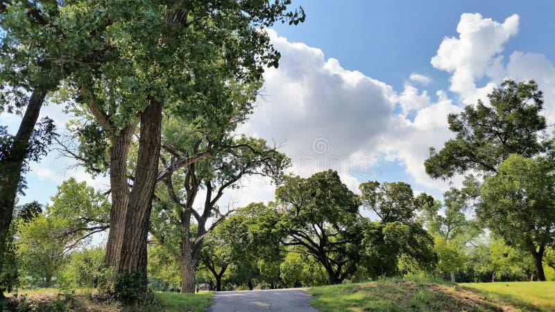 Árboles con los cielos azules abiertos imagen de archivo