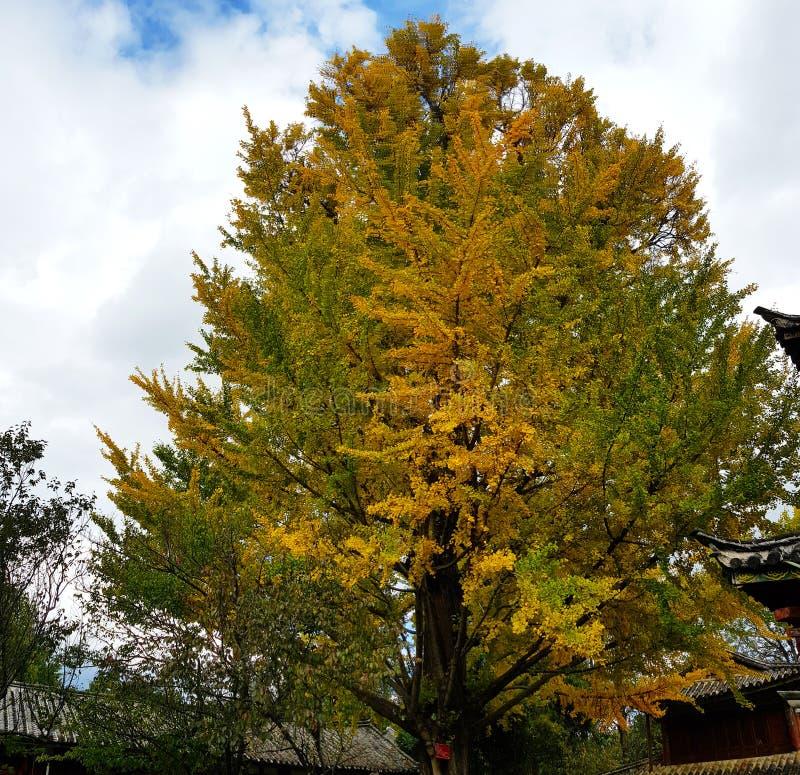 Árboles con los colores típicos del otoño, China fotos de archivo