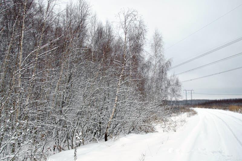 Árboles con nieve en el campo foto de archivo