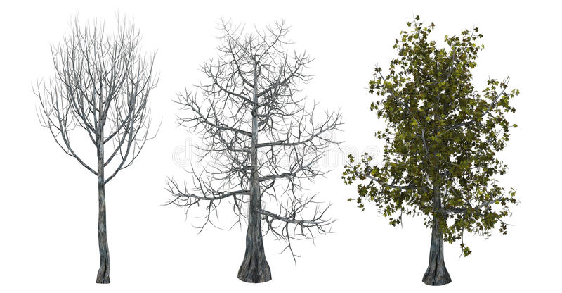 Árboles con y sin las hojas stock de ilustración