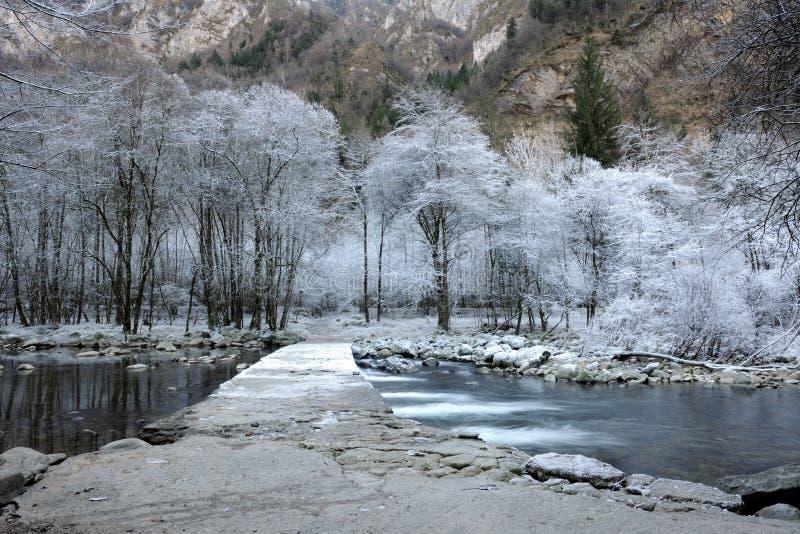 Árboles congelados fotografía de archivo