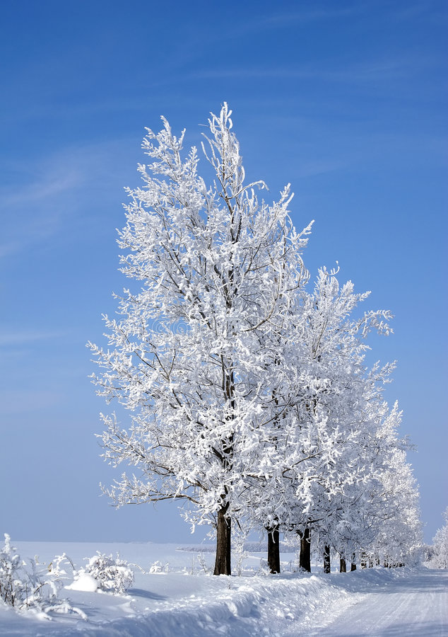 Árboles congelados fotos de archivo