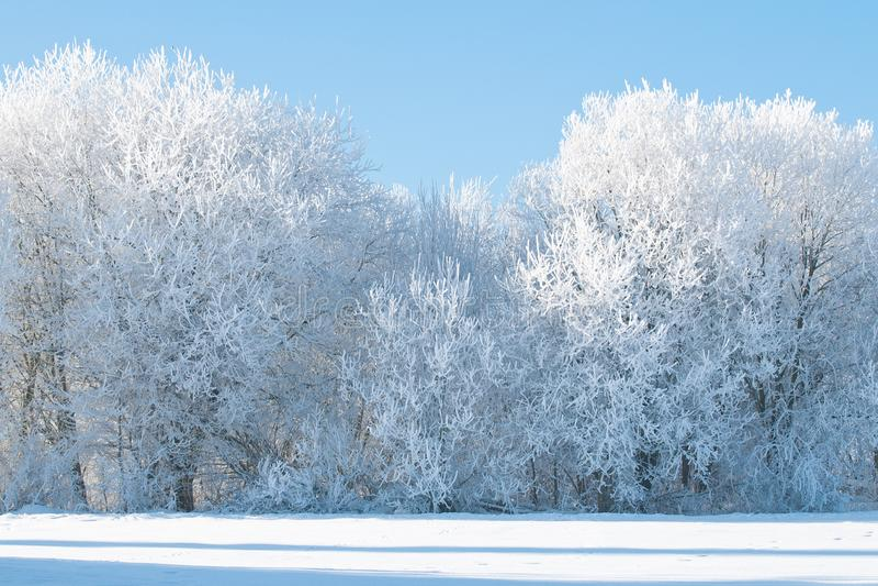 Árboles congelados en el campo foto de archivo