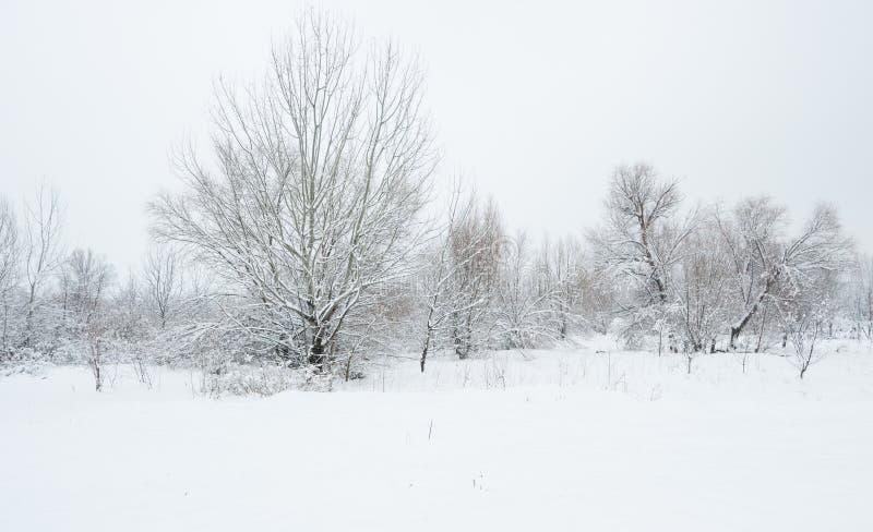 Árboles congelados en el parque o el bosque con escarcha de la nieve y del hielo en el día de invierno brumoso frío en naturaleza imágenes de archivo libres de regalías