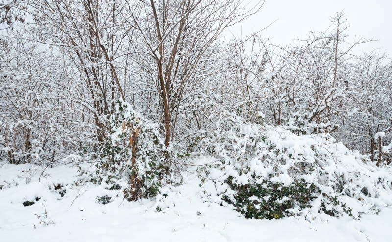 Árboles congelados en el parque o el bosque con escarcha de la nieve y del hielo en el día de invierno brumoso frío en naturaleza foto de archivo libre de regalías