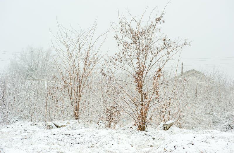 Árboles congelados en el parque o el bosque con nieve e hielo en el día de invierno brumoso frío imagen de archivo libre de regalías