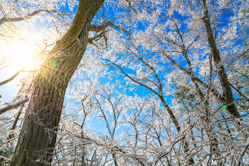 Árboles congelados en invierno imagen de archivo