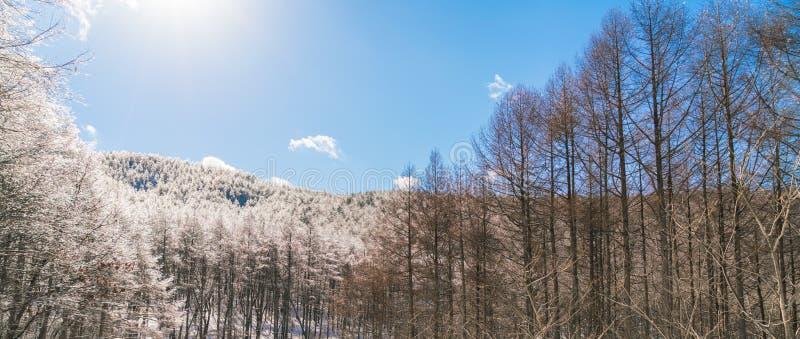 'Árboles congelados en invierno con el cielo azul fotografía de archivo