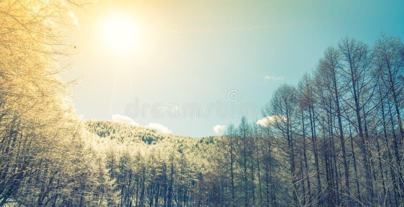 Árboles congelados en invierno con el cielo azul (imagen filtrada procesada imágenes de archivo libres de regalías
