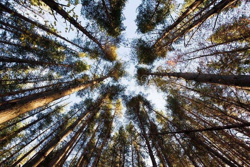 Árboles contra el cielo imagen de archivo