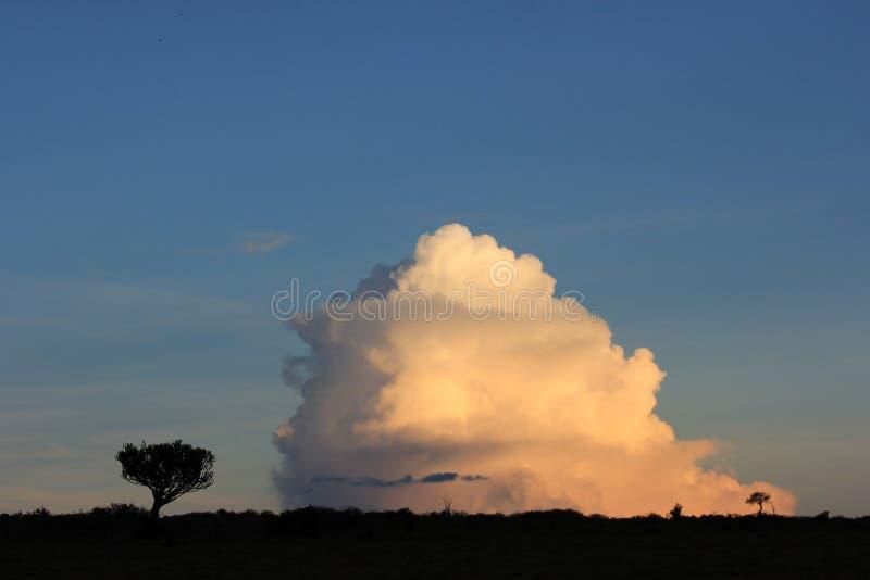 Árboles contra las nubes 3 imágenes de archivo libres de regalías