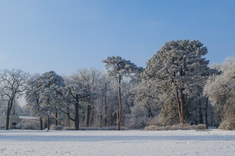 Árboles cubiertos con helada en un bosque nevoso imagen de archivo