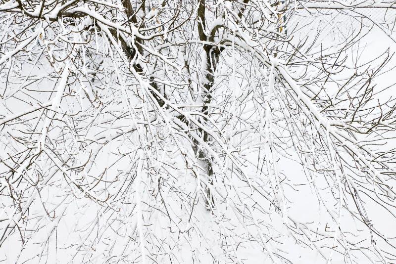 Árboles cubiertos con nieve, inviernos fríos foto de archivo
