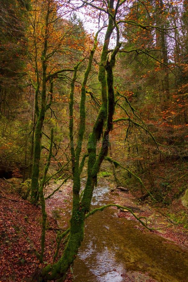 Árboles cubiertos de musgo del otoño y un río imágenes de archivo libres de regalías