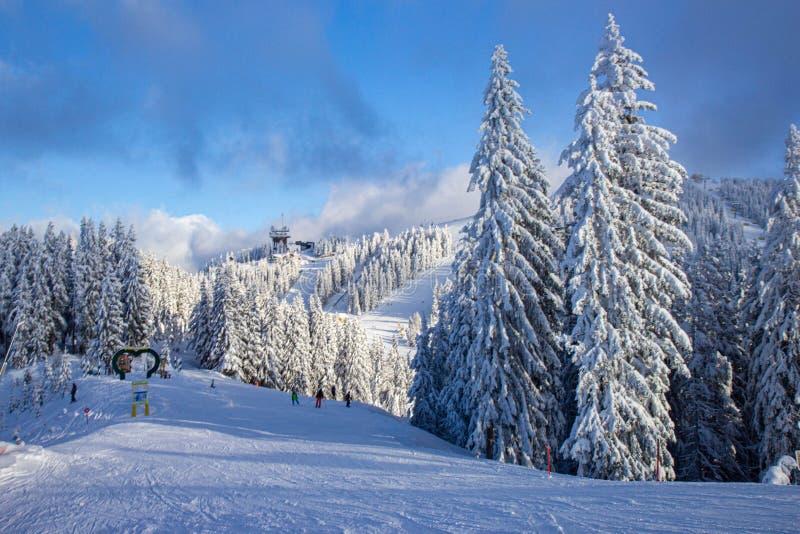 árboles cubiertos de nieve en las pistas de la estación de esquí de Schladming fotos de archivo libres de regalías