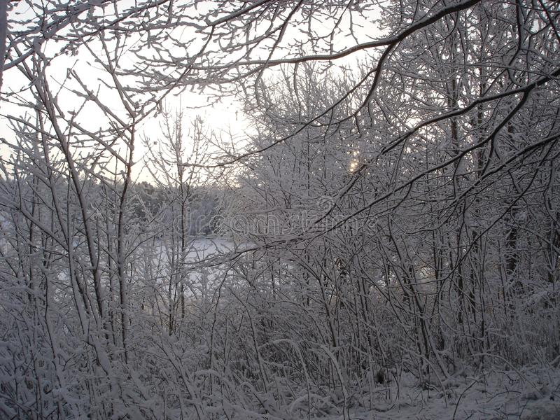 Árboles cubiertos en nieve e hielo imágenes de archivo libres de regalías