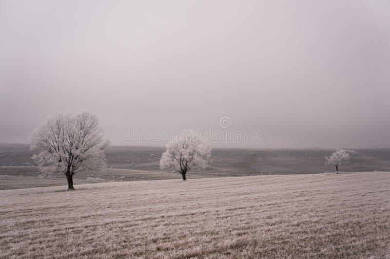 Árboles cubiertos por helada del invierno fotos de archivo