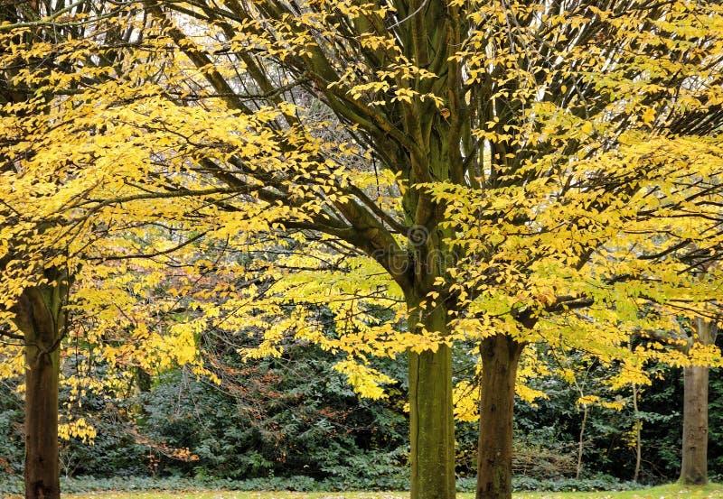 Árboles cubiertos por un arbusto grueso de hojas con colores intensos del otoño imagen de archivo libre de regalías