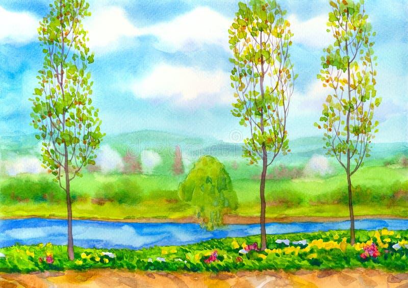 Árboles de álamo jovenes en el río stock de ilustración