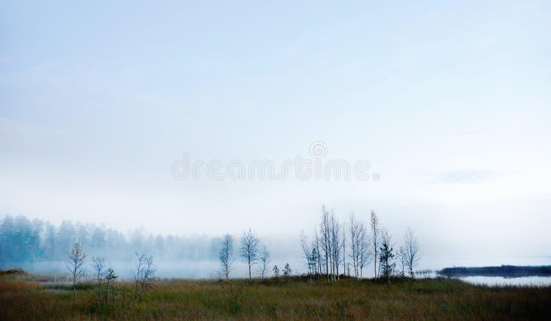 Árboles de abedul desnudos por el río de niebla foto de archivo libre de regalías