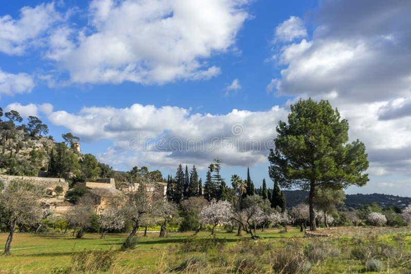 árboles de almendra florecientes foto de archivo libre de regalías