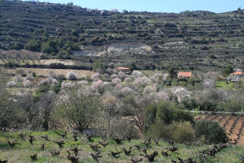 Árboles de almendra florecientes en las montañas imágenes de archivo libres de regalías