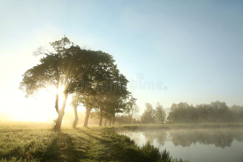 Árboles de arce en la orilla del lago en la salida del sol imagen de archivo libre de regalías