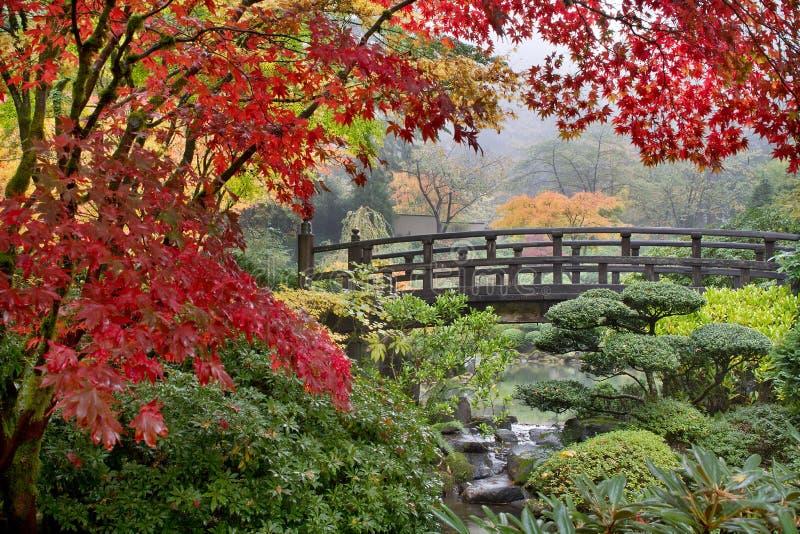 Árboles de arce japonés por el puente en caída imagen de archivo