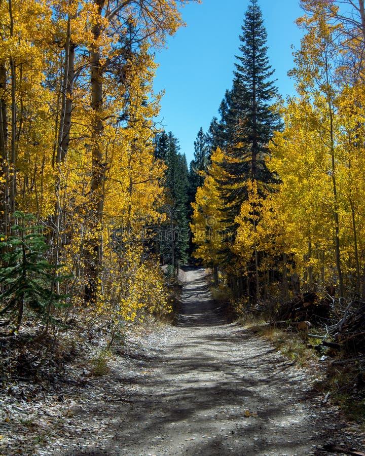 Árboles de Aspen en Nevada en el otoño foto de archivo libre de regalías