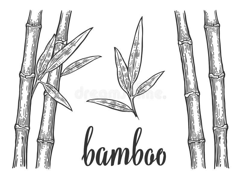 Árboles de bambú con las siluetas blancas de la hoja y el esquema negro Elemento dibujado mano del diseño Grabado del vector del  stock de ilustración