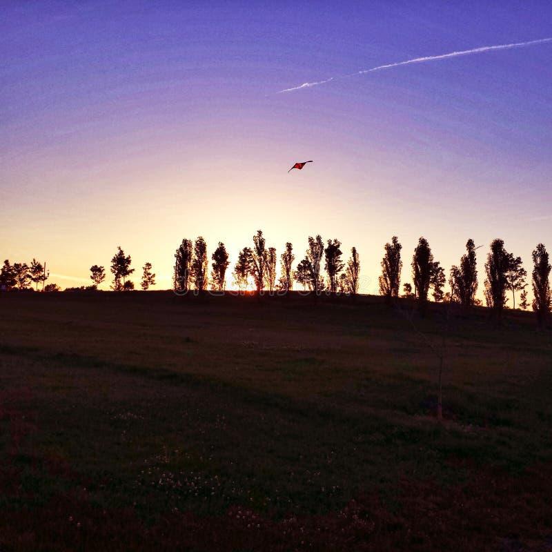Árboles de Behing de la puesta del sol foto de archivo libre de regalías