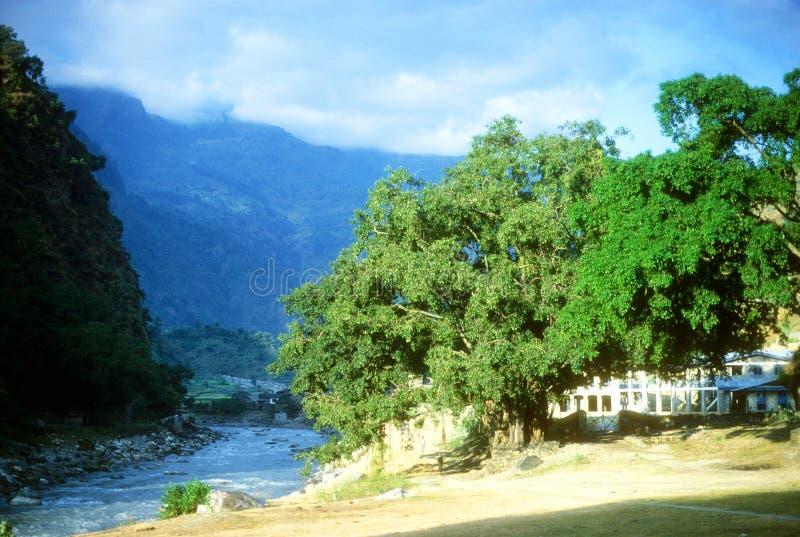 Árboles de Bodhi a lo largo del Kali Gandaki fotos de archivo